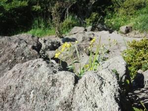 荒山のお花#3